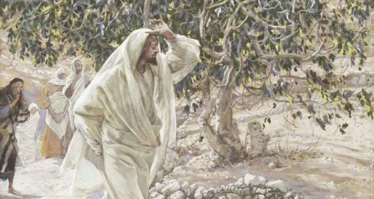 Jesus Fig, October 28th, 2018